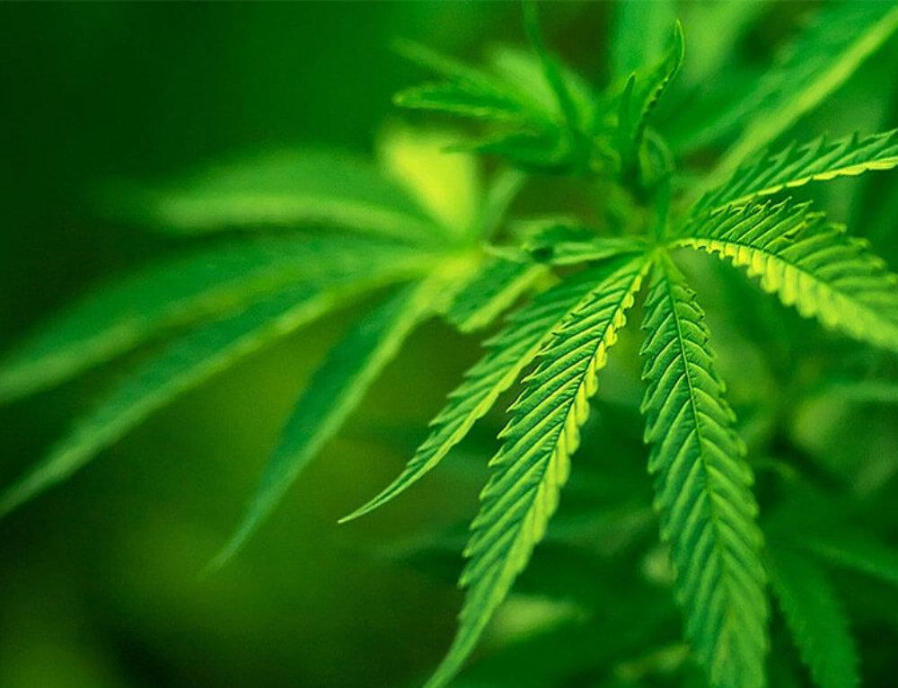 Carson City Board of Supervisors delay marijuana sales